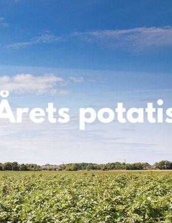 Årets Potatis