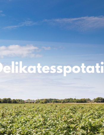 Delikatesspotatis