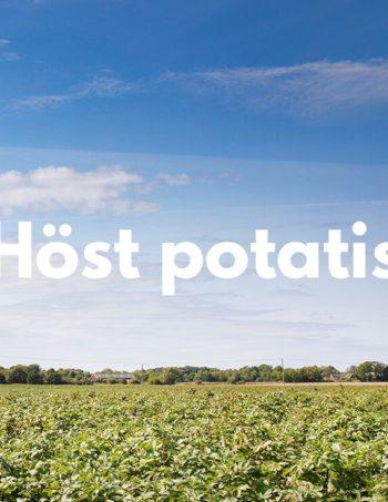 Höst potatis