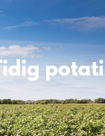 Tidig potatis