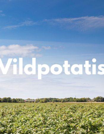 Vildpotatis/Solanum Phureja